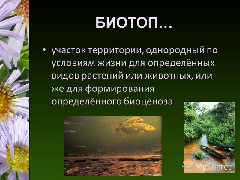 БИОТОП… участок территории, однородный по условиям жизни для определённых видов растений или животных, или же для формирования определённого биоценоза