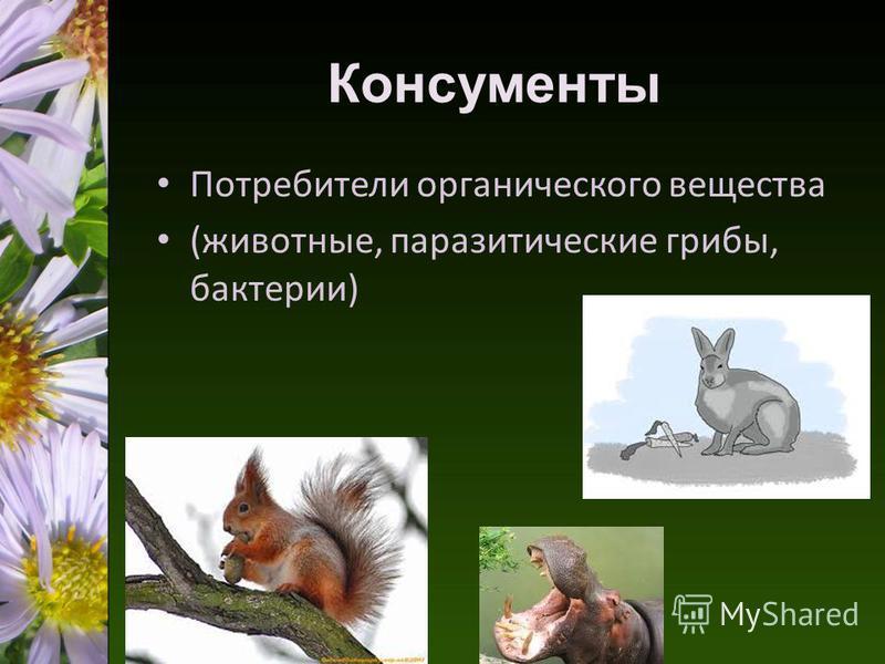 Консументы Потребители органического вещества (животные, паразитические грибы, бактерии)