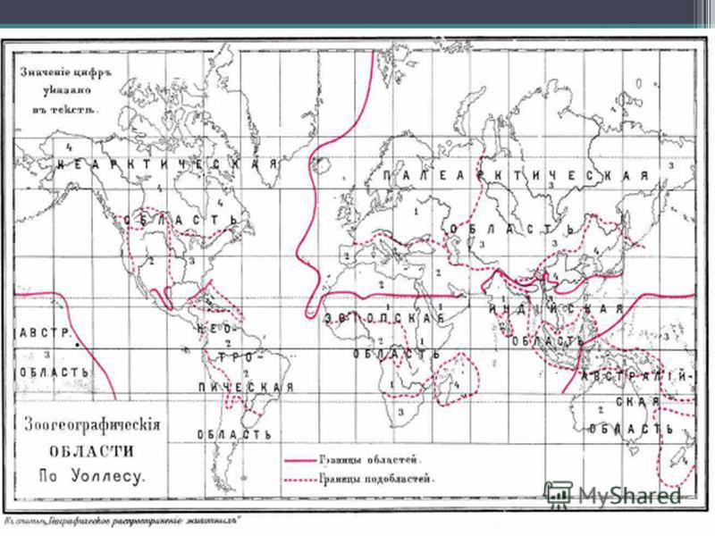5. Биогеографические доказательства 1)Палеоарктическая 2)Неоарктическая 3)Эфиопская 4)Индомалайская 5)Неотропическая 6)Австралийская Зоогеографические области: