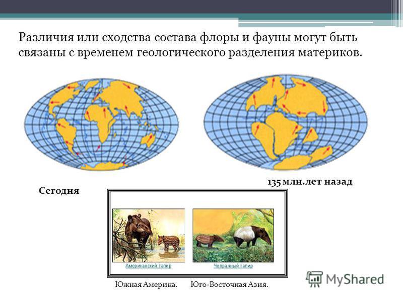 Сегодня 135 млн.лет назад Различия или сходства состава флоры и фауны могут быть связаны с временем геологического разделения материков. Южная Америка. Юго-Восточная Азия.