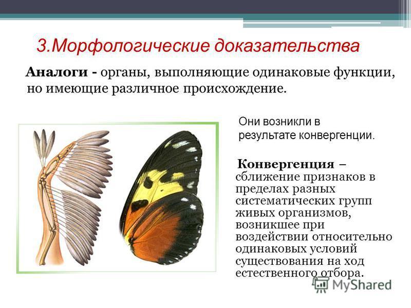 3. Морфологические доказательства Аналоги - органы, выполняющие одинаковые функции, но имеющие различное происхождение. Конвергенция – сближение признаков в пределах разных систематических групп живых организмов, возникшее при воздействии относительн