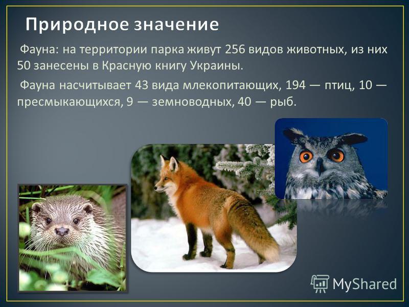 Фауна : на территории парка живут 256 видов животных, из них 50 занесены в Красную книгу Украины. Фауна насчитывает 43 вида млекопитающих, 194 птиц, 10 пресмыкающихся, 9 земноводных, 40 рыб.