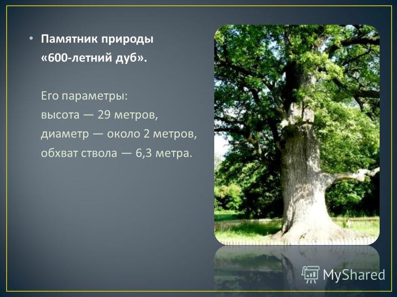 Памятник природы «600- летний дуб ». Его параметры : высота 29 метров, диаметр около 2 метров, обхват ствола 6,3 метра.