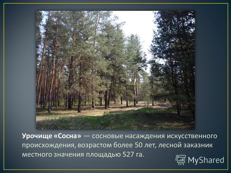 Урочище « Сосна » сосновые насаждения искусственного происхождения, возрастом более 50 лет, лесной заказник местного значения площадью 527 га.