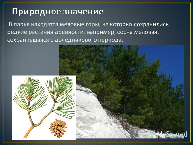В парке находятся меловые горы, на которых сохранились редкие растения древности, например, сосна меловая, сохранившаяся с доледникового периода.