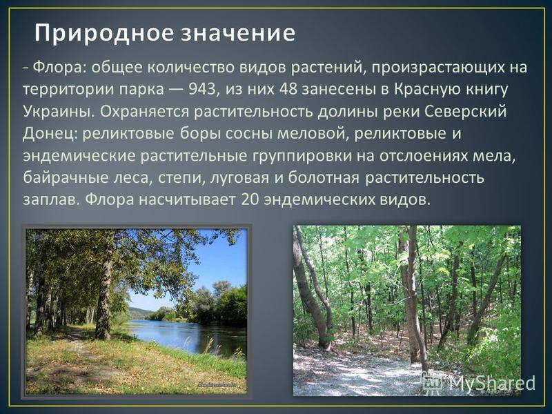 - Флора : общее количество видов растений, произрастающих на территории парка 943, из них 48 занесены в Красную книгу Украины. Охраняется растительность долины реки Северский Донец : реликтовые боры сосны меловой, реликтовые и эндемические растительн