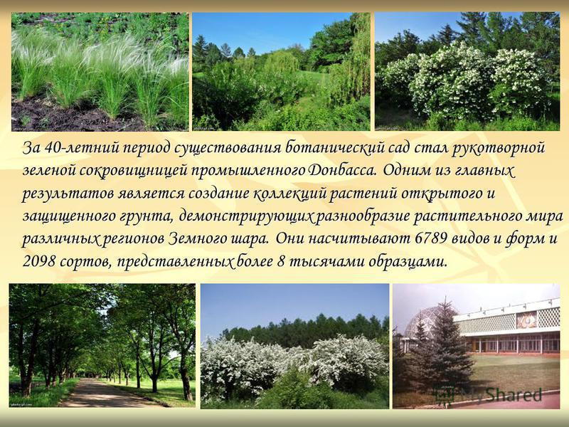 За 40-летний период существования ботанический сад стал рукотворной зеленой сокровищницей промышленного Донбасса. Одним из главных результатов является создание коллекций растений открытого и защищенного грунта, демонстрирующих разнообразие раститель