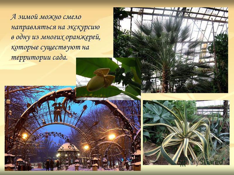 А зимой можно смело направляться на экскурсию в одну из многих оранжерей, которые существуют на территории сада.
