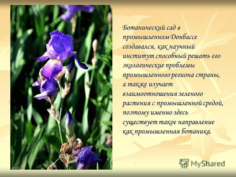 Ботанический сад в промышленном Донбассе создавался, как научный институт способный решать его экологические проблемы промышленного региона страны, а также изучает взаимоотношения зеленого растения с промышленной средой, поэтому именно здесь существу