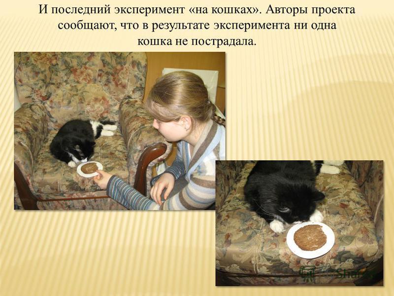 И последний эксперимент «на кошках». Авторы проекта сообщают, что в результате эксперимента ни одна кошка не пострадала.