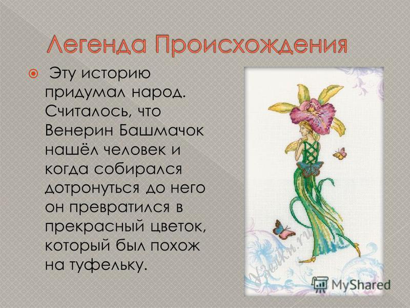 Эту историю придумал народ. Считалось, что Венерин Башмачок нашёл человек и когда собирался дотронуться до него он превратился в прекрасный цветок, который был похож на туфельку.