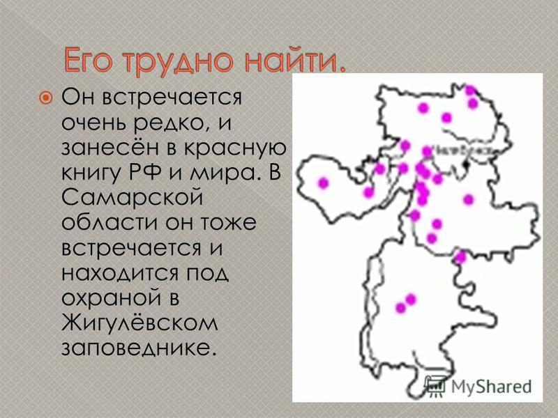 Он встречается очень редко, и занесён в красную книгу РФ и мира. В Самарской области он тоже встречается и находится под охраной в Жигулёвском заповеднике.