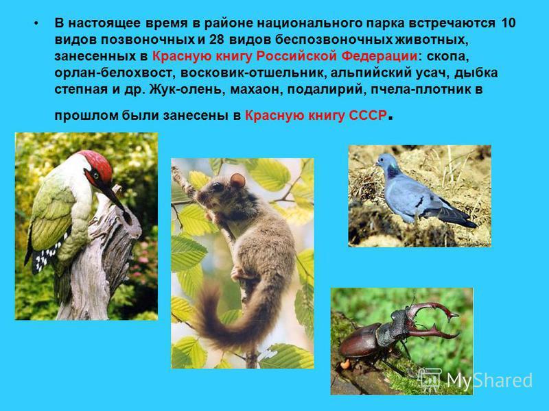 В настоящее время в районе национального парка встречаются 10 видов позвоночных и 28 видов беспозвоночных животных, занесенных в Красную книгу Российской Федерации: скопа, орлан-белохвост, восковик-отшельник, альпийский усач, дыбка степная и др. Жук-