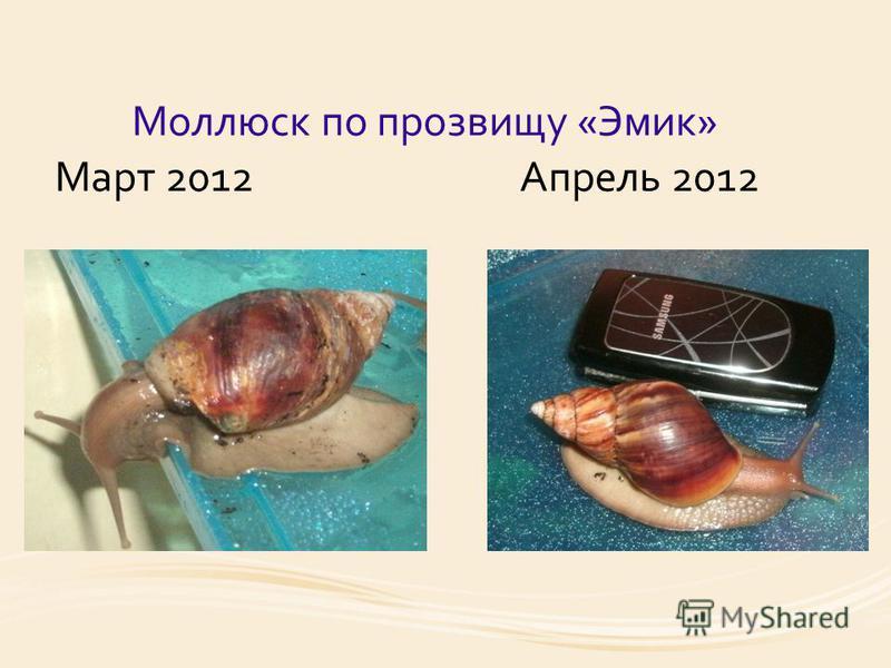 Моллюск по прозвищу «Эмик» Март 2012 Апрель 2012