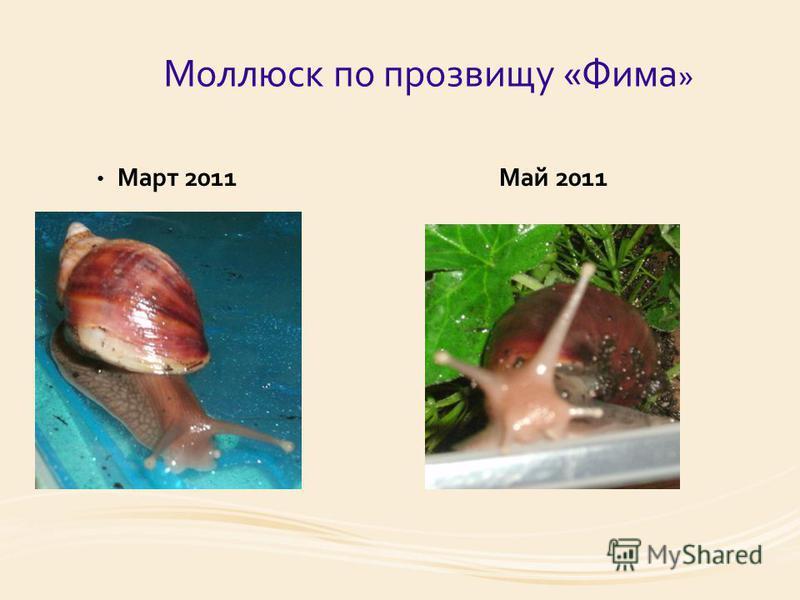 Моллюск по прозвищу «Фима » Март 2011 Май 2011