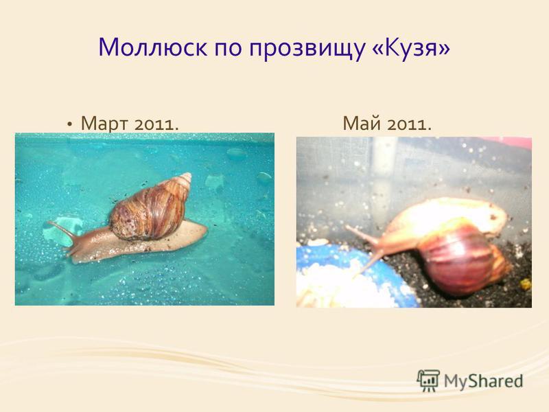 Моллюск по прозвищу «Кузя» Март 2011. Май 2011.