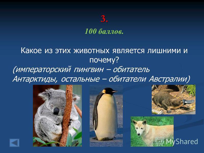 3. 100 баллов. Какое из этих животных является лишними и почему? (императорский пингвин – обитатель Антарктиды, остальные – обитатели Австралии)