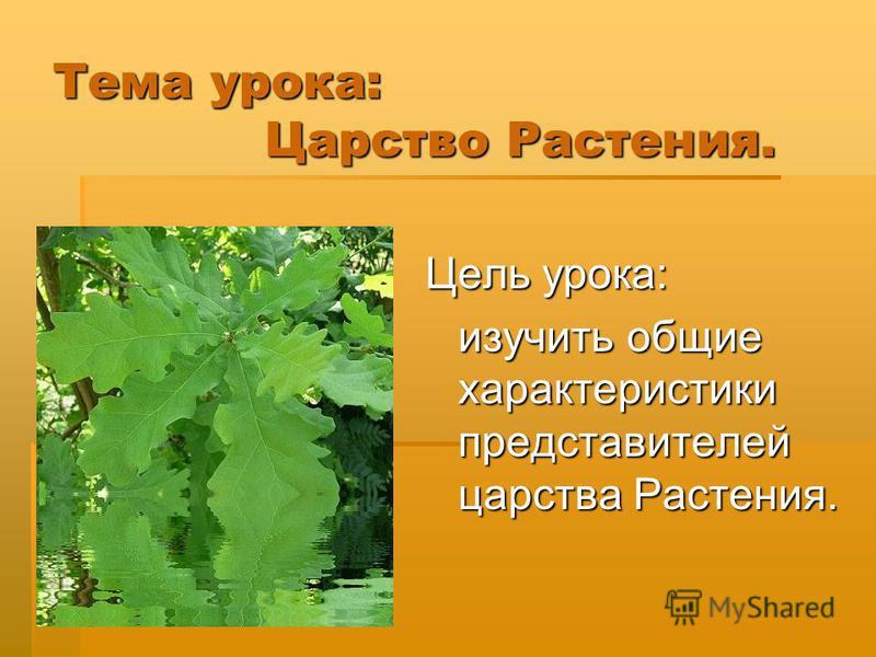 Тема урока: Царство Растения. Цель урока: изучить общие характеристики представителей царства Растения.