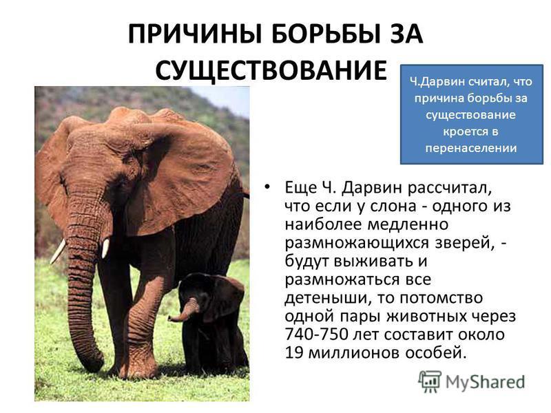 ПРИЧИНЫ БОРЬБЫ ЗА СУЩЕСТВОВАНИЕ Еще Ч. Дарвин рассчитал, что если у слона - одного из наиболее медленно размножающихся зверей, - будут выживать и размножаться все детеныши, то потомство одной пары животных через 740-750 лет составит около 19 миллионо