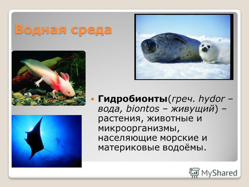 Водная среда Гидробионты(греч. hydor – вода, biontos – живущий) – растения, животные и микроорганизмы, населяющие морские и материковые водоёмы.