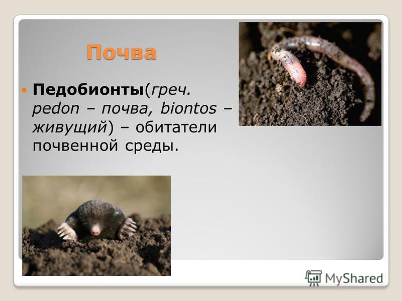 Почва Педобионты(греч. pedon – почва, biontos – живущий) – обитатели почвенной среды.