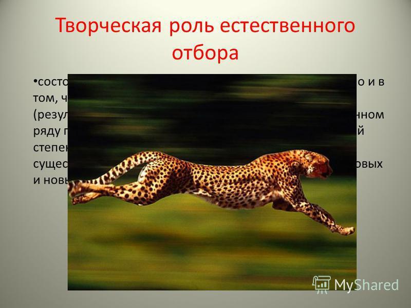 Творческая роль естественного отбора состоит не только в устранении неприспособленных, но и в том, что он направляет возникающие приспособления (результат мутаций и рекомбинаций),