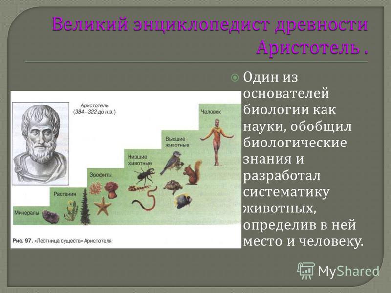 Один из основателей биологии как науки, обобщил биологические знания и разработал систематику животных, определив в ней место и человеку.