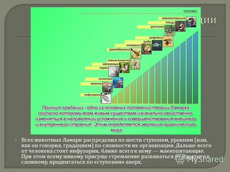 Всех животных Ламарк распределил по шести ступеням, уровням ( или, как он говорил, градациям ) по сложности их организации. Дальше всего от человека стоят инфузории, ближе всего к нему млекопитающие. При этом всему живому присуще стремление развивать