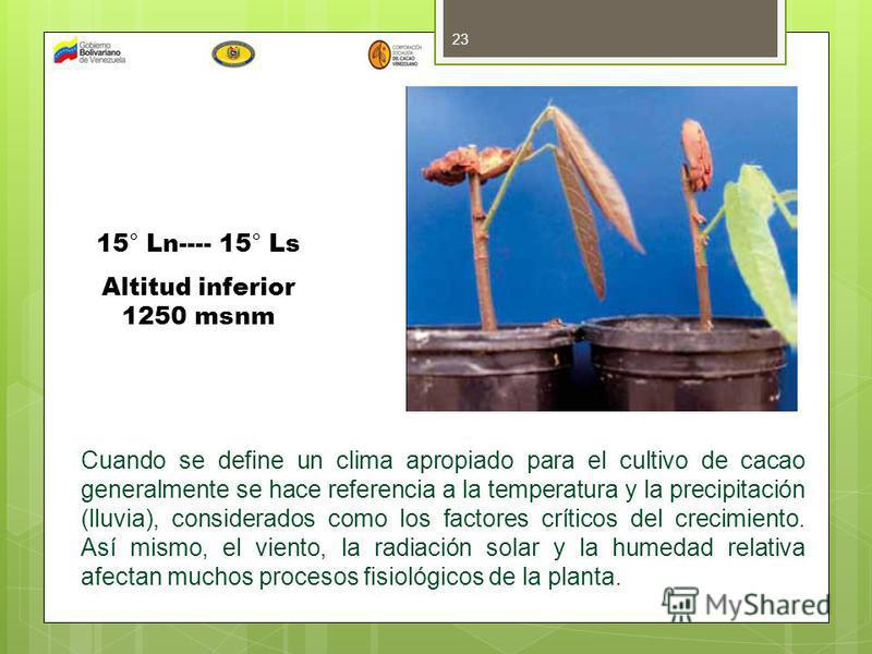 23 15° Ln---- 15° Ls Altitud inferior 1250 msnm Cuando se define un clima apropiado para el cultivo de cacao generalmente se hace referencia a la temperatura y la precipitación (lluvia), considerados como los factores críticos del crecimiento. Así mi