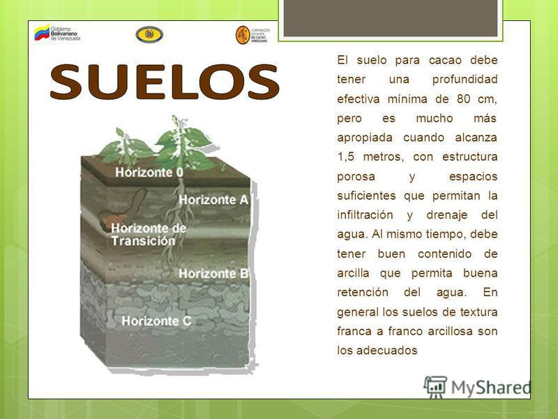 El suelo para cacao debe tener una profundidad efectiva mínima de 80 cm, pero es mucho más apropiada cuando alcanza 1,5 metros, con estructura porosa y espacios suficientes que permitan la infiltración y drenaje del agua. Al mismo tiempo, debe tener