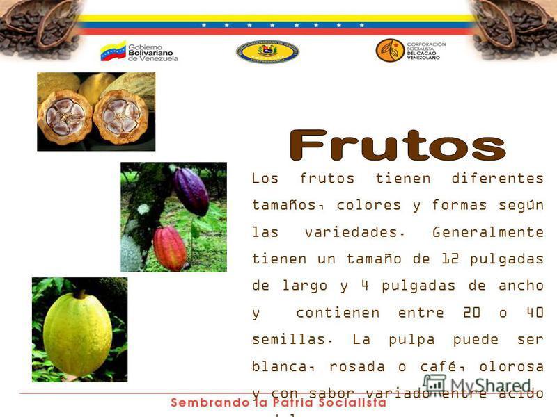 Los frutos tienen diferentes tamaños, colores y formas según las variedades. Generalmente tienen un tamaño de 12 pulgadas de largo y 4 pulgadas de ancho y contienen entre 20 o 40 semillas. La pulpa puede ser blanca, rosada o café, olorosa y con sabor