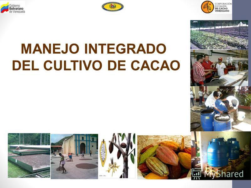 MANEJO INTEGRADO DEL CULTIVO DE CACAO