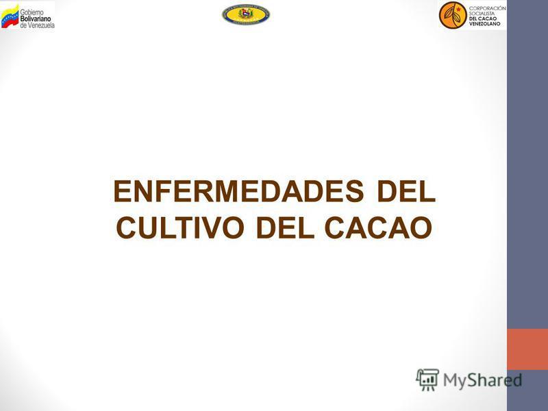 ENFERMEDADES DEL CULTIVO DEL CACAO