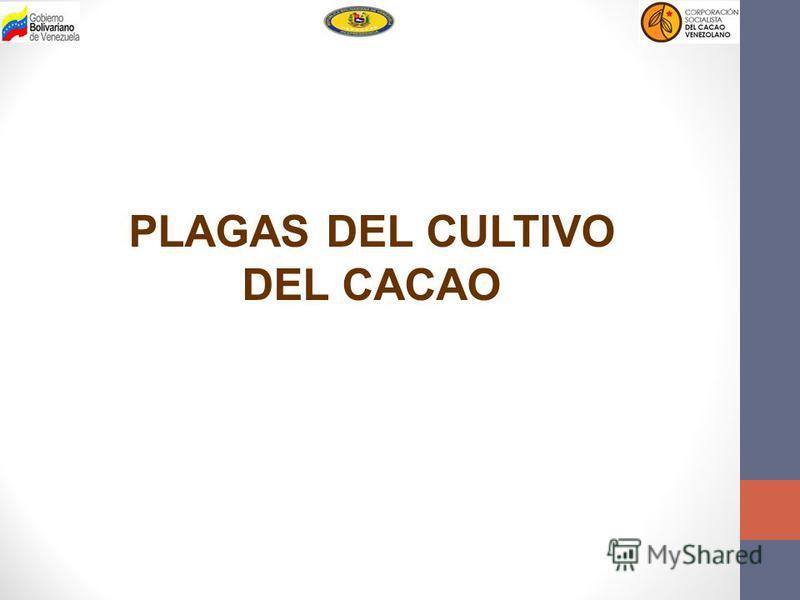PLAGAS DEL CULTIVO DEL CACAO