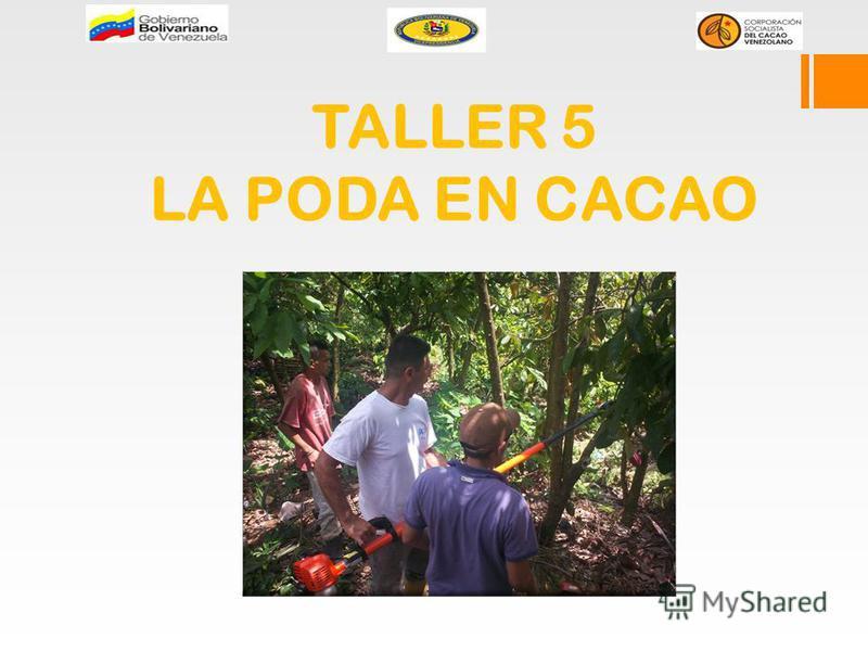 TALLER 5 LA PODA EN CACAO