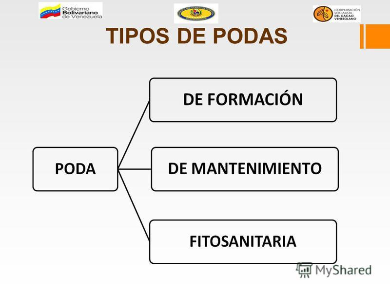 TIPOS DE PODAS