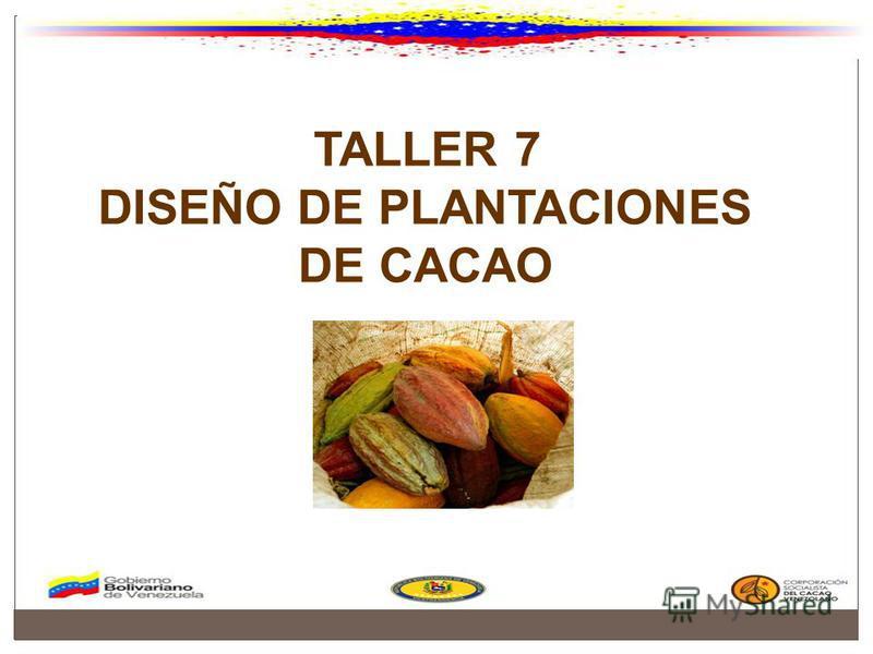 TALLER 7 DISEÑO DE PLANTACIONES DE CACAO
