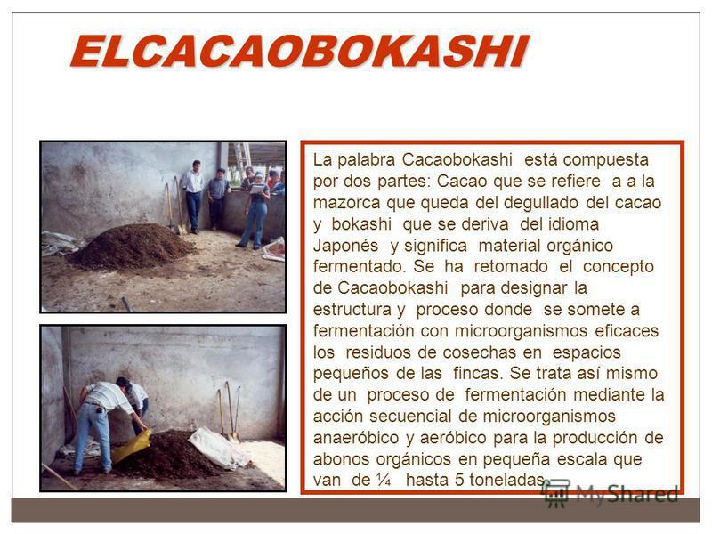 ELCACAOBOKASHI La palabra Cacaobokashi está compuesta por dos partes: Cacao que se refiere a a la mazorca que queda del degullado del cacao y bokashi que se deriva del idioma Japonés y significa material orgánico fermentado. Se ha retomado el concept