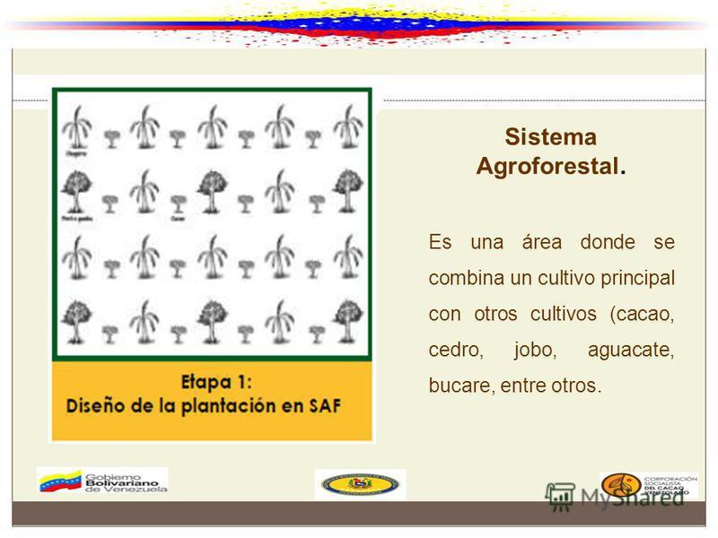 Sistema Agroforestal. Es una área donde se combina un cultivo principal con otros cultivos (cacao, cedro, jobo, aguacate, bucare, entre otros.