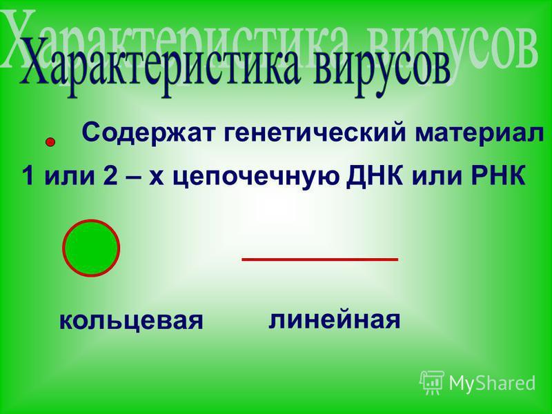 Содержат генетический материал 1 или 2 – х цепочечную ДНК или РНК кольцевая линейная