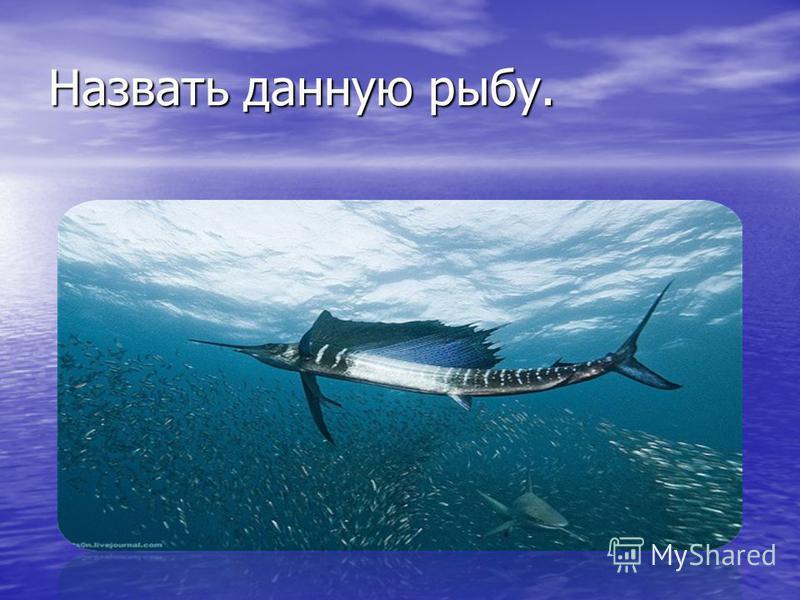 Назвать данную рыбу.