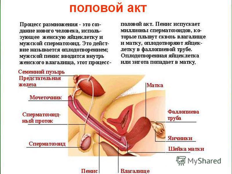 Анатомофункциональные изменения при климаксе
