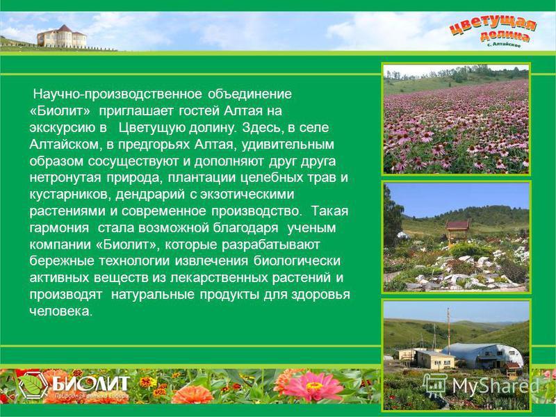 Научно-производственное объединение «Биолит» приглашает гостей Алтая на экскурсию в Цветущую долину. Здесь, в селе Алтайском, в предгорьях Алтая, удивительным образом сосуществуют и дополняют друг друга нетронутая природа, плантации целебных трав и к