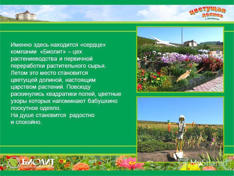 Именно здесь находится «сердце» компании «Биолит» – цех растениеводства и первичной переработки растительного сырья. Летом это место становится цветущей долиной, настоящим царством растений. Повсюду раскинулись квадратики полей, цветные узоры которых