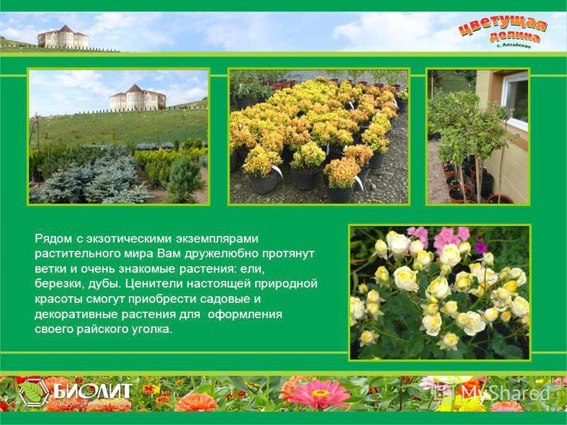 Рядом с экзотическими экземплярами растительного мира Вам дружелюбно протянут ветки и очень знакомые растения: ели, березки, дубы. Ценители настоящей природной красоты смогут приобрести садовые и декоративные растения для оформления своего райского у