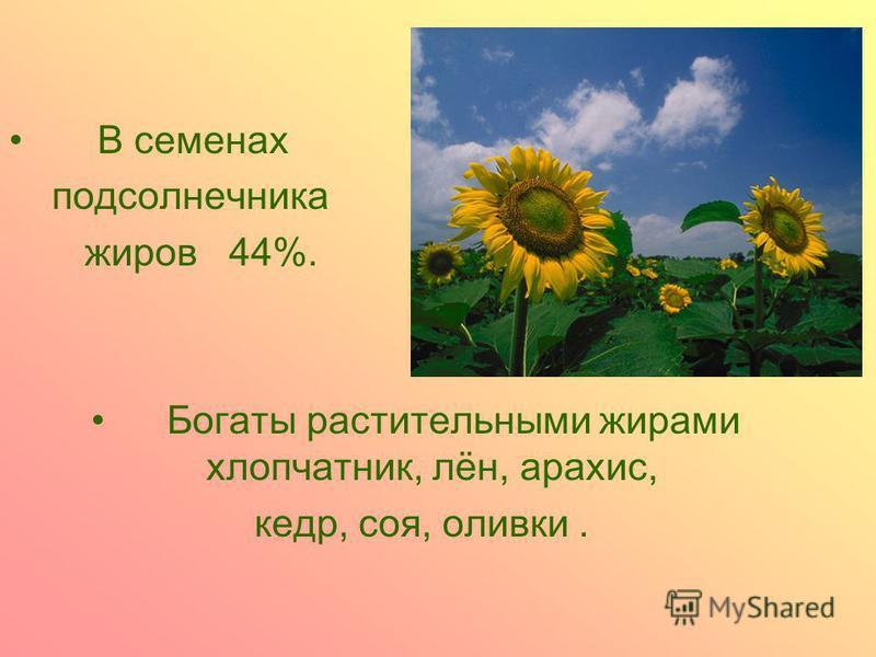 В семенах подсолнечника жиров 44%. Богаты растительными жирами хлопчатник, лён, арахис, кедр, соя, оливки.