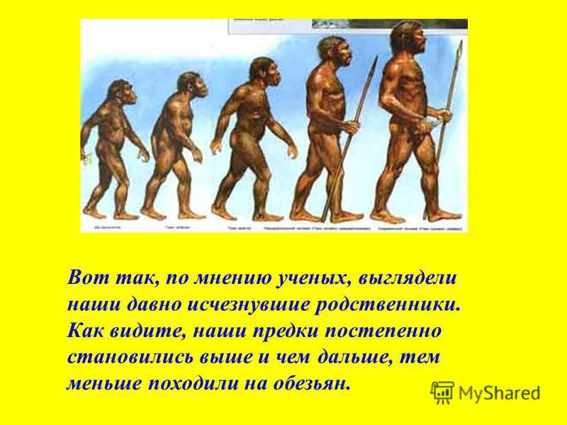 Вот так, по мнению ученых, выглядели наши давно исчезнувшие родственники. Как видите, наши предки постепенно становились выше и чем дальше, тем меньше походили на обезьян.