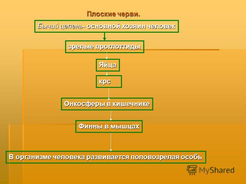 Плоские черви. Бычий цепень- основной хозяин человек зрелые проглоттиды Яйца Онкосферы в кишечнике крс Финны в мышцах В организме человека развивается половозрелая особь