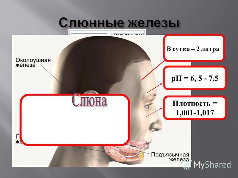 В сутки – 2 литра рH = 6, 5 - 7,5 Плотность = 1,001-1,017