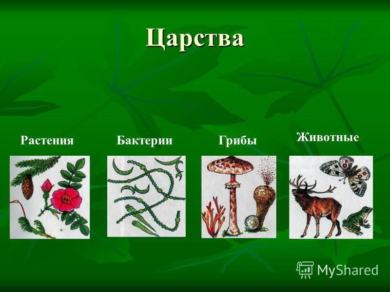 Царства Бактерии ГрибыРастения Животные